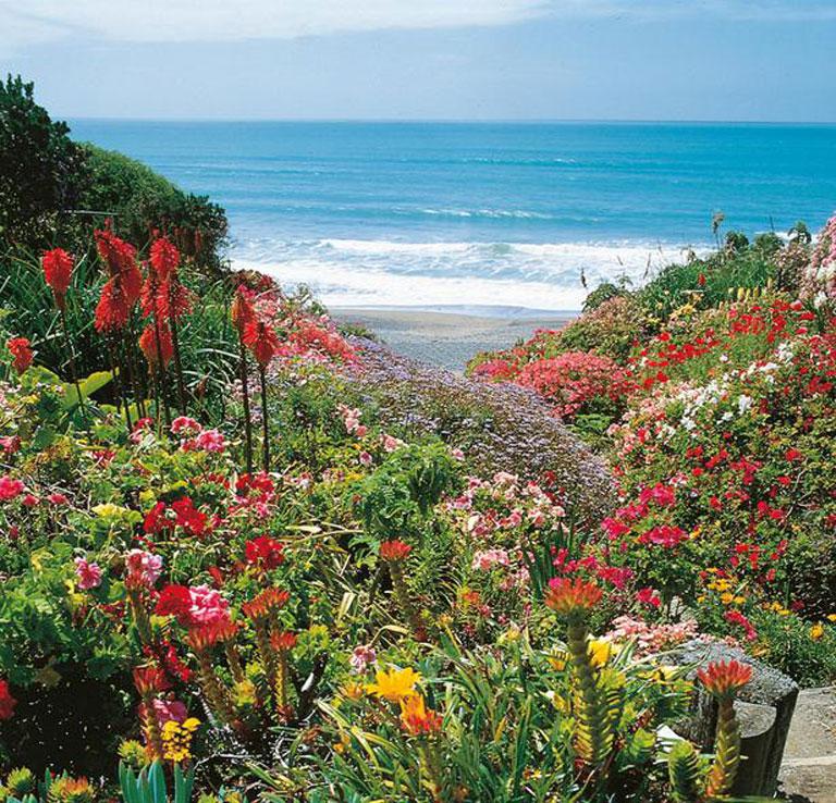 Coastal Sage Gardening Grand Re-Opening Party