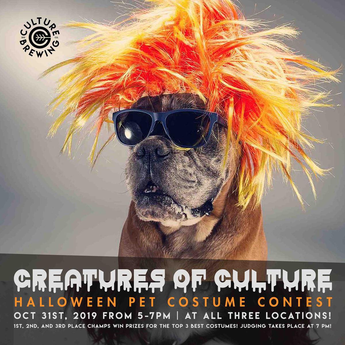 Ocean Beach News Article: CREATURES OF CULTURE - HALLOWEEN PET COSTUME CONTEST, OCTOBER 31ST!