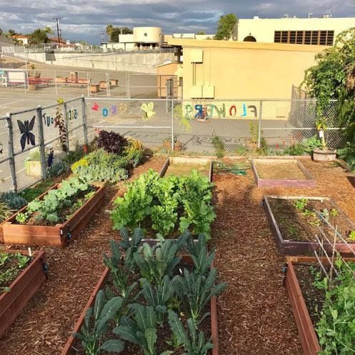 Rooted In Place Volunteer Day at Loma Portal