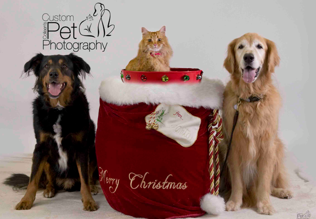 Holiday Pet Photos at Dog Beach Dog Wash