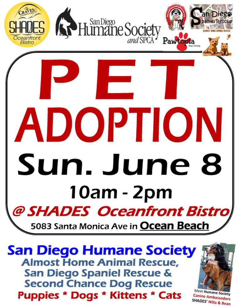 Shades Ocean Beach Pet Adoption