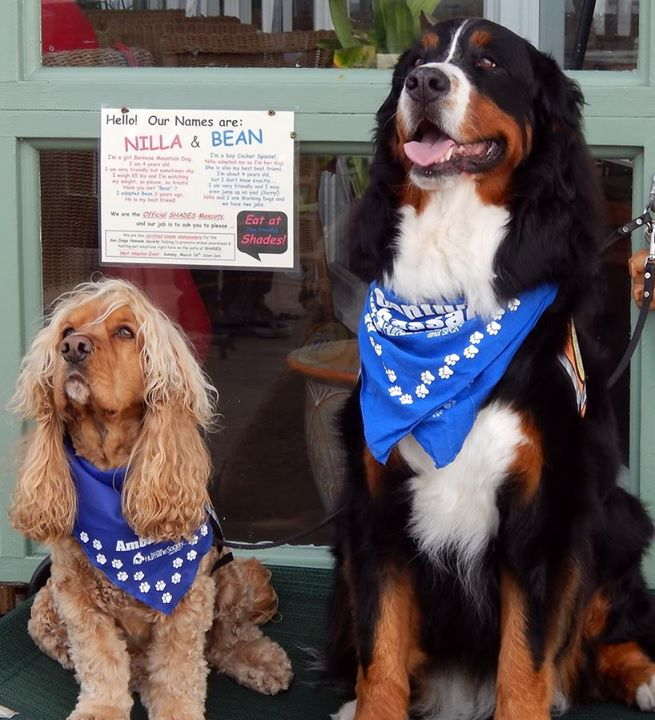 Bernese Mountain Dog Brunch at Shades