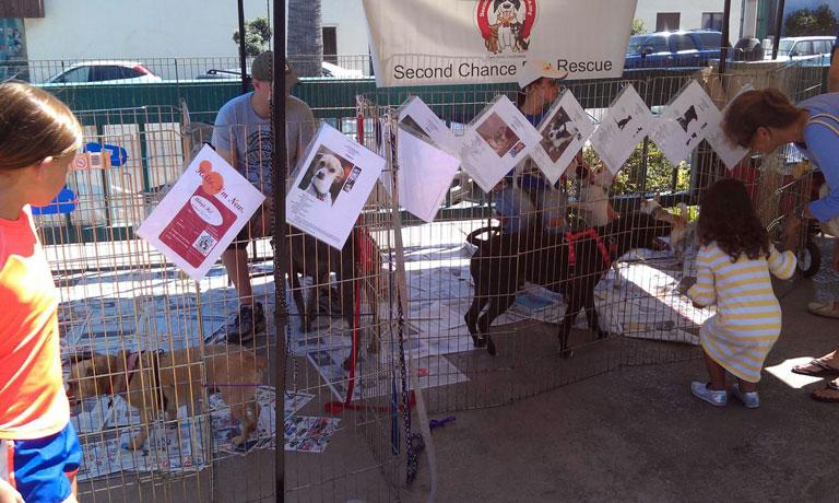 SHADES Pet Adoption