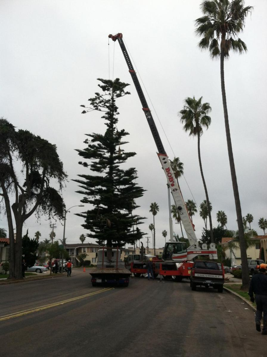OB Christmas Tree 2012