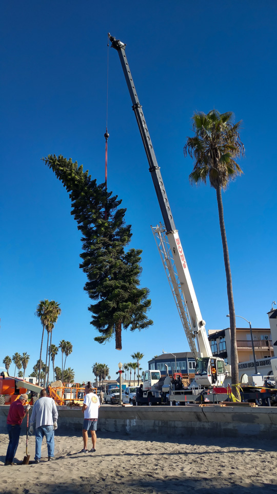 Ocean Beach Christmas Tree (2018)