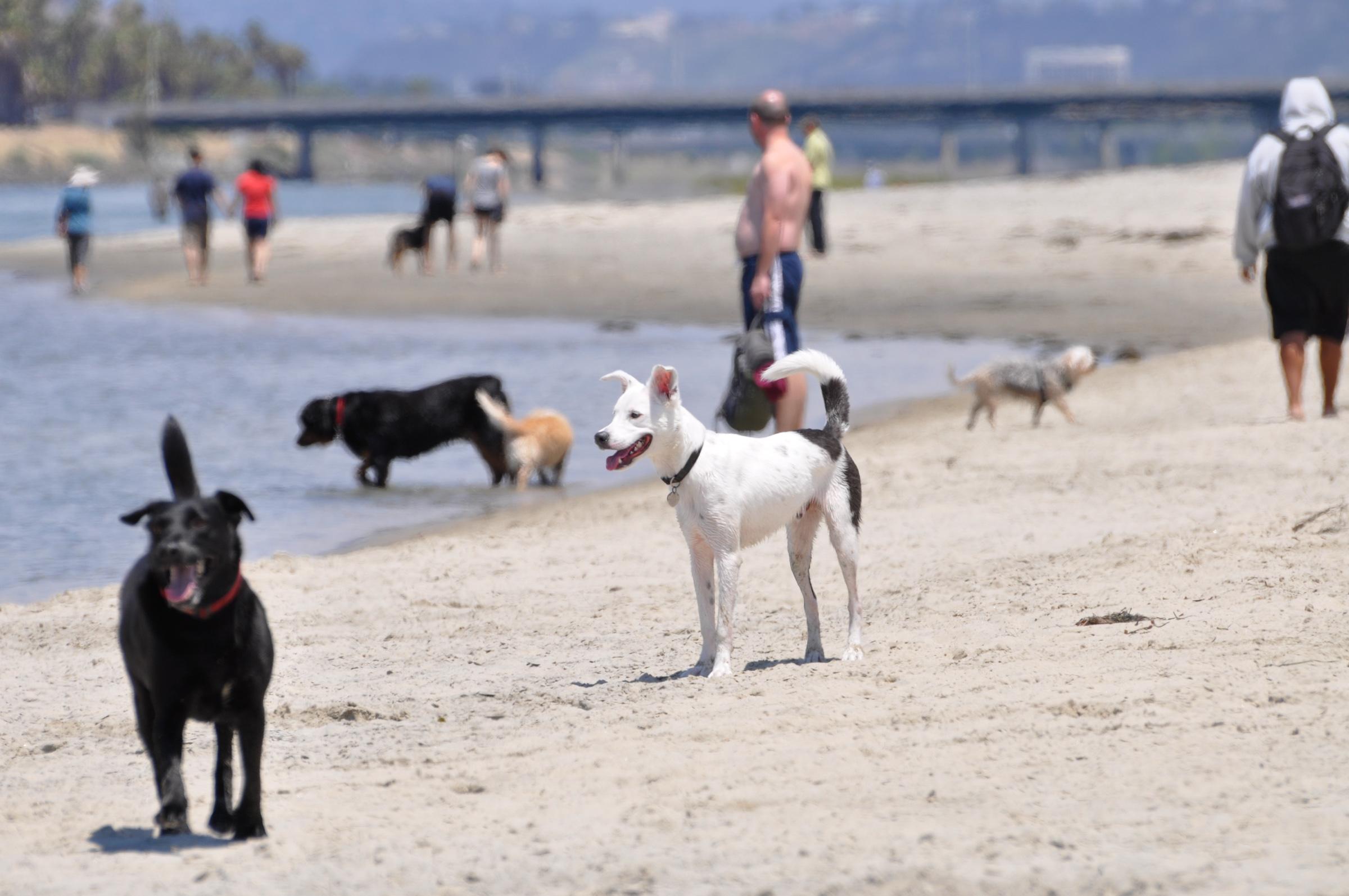 Dog Beach | Ocean Beach San Diego CA