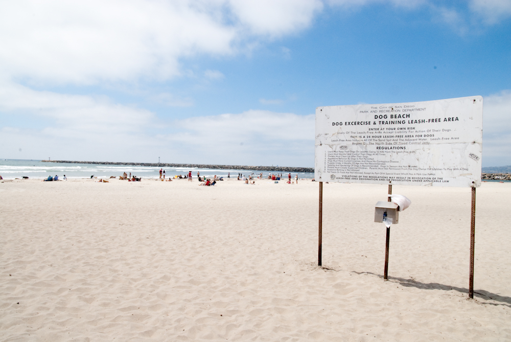 Dog Beach Ocean