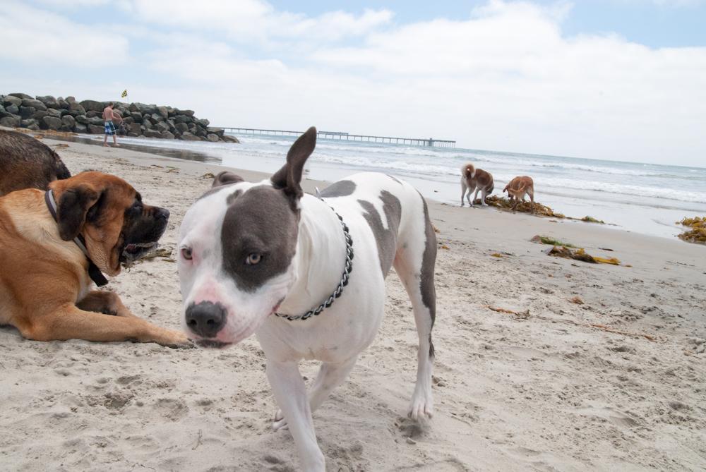 Ocean Beach Woman S Club San Diego Ca