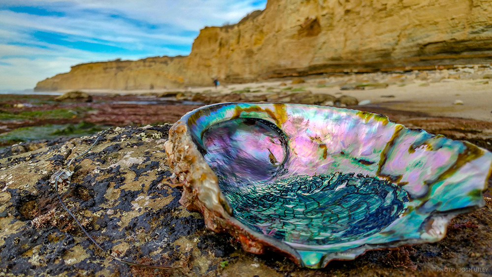 Sunset Cliffs San Diego Abalone Shell Ocean Beach California