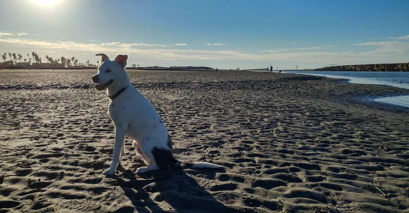 Photo of: Dog Beach