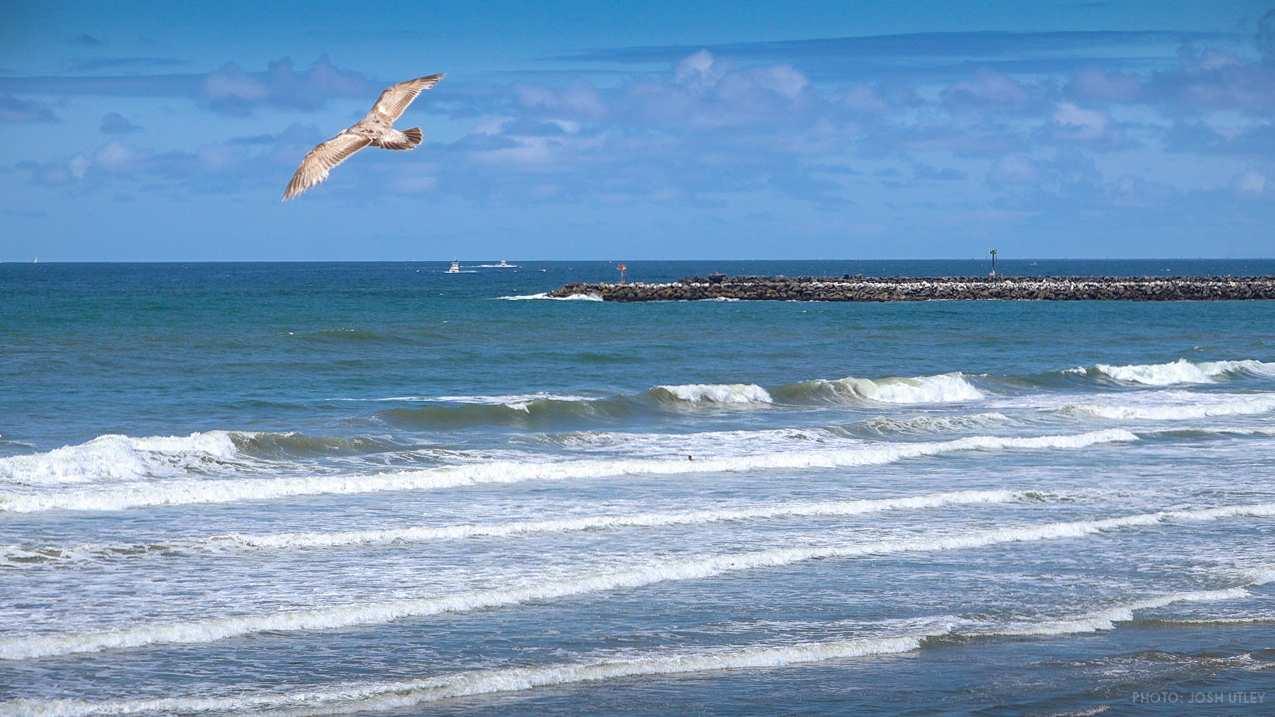 Memorial Day Weekend Ocean Beach San Diego