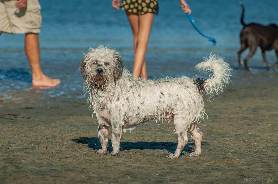 Photo of: Dog Beach (2019)