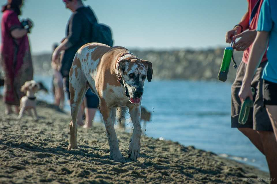 Photo of: Dog Beach (2019)