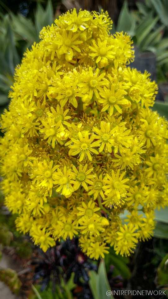 Photo of: Newport Avenue Flowers
