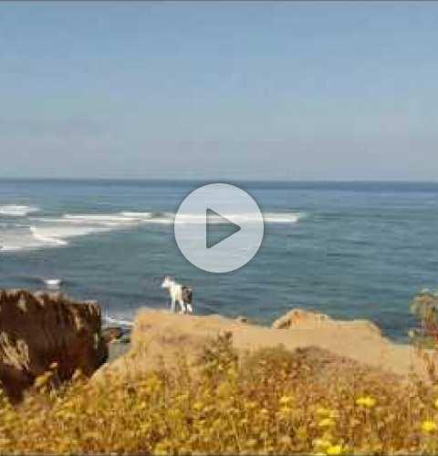Sunset Cliffs Ocean Beach San Diego California