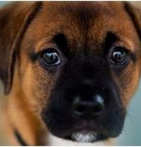 March OB Dog Adoption at Wonderland/OB Surf Lodge