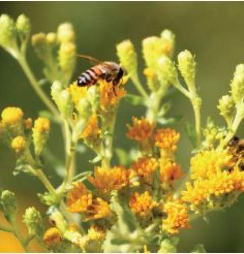 Community Meeting on Native Planting for Sunset Cliffs Natural Park