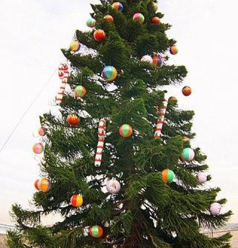 OB Christmas Tree 2007
